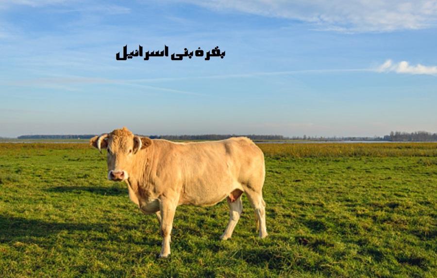 YELLOW COW.jpg